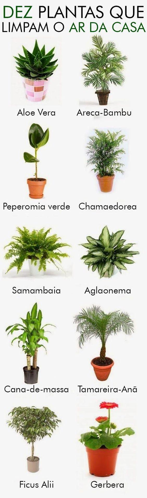 Plantas-que-purificam-o-ar.