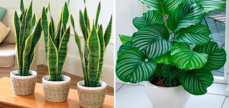 plantas-lugares-escuros